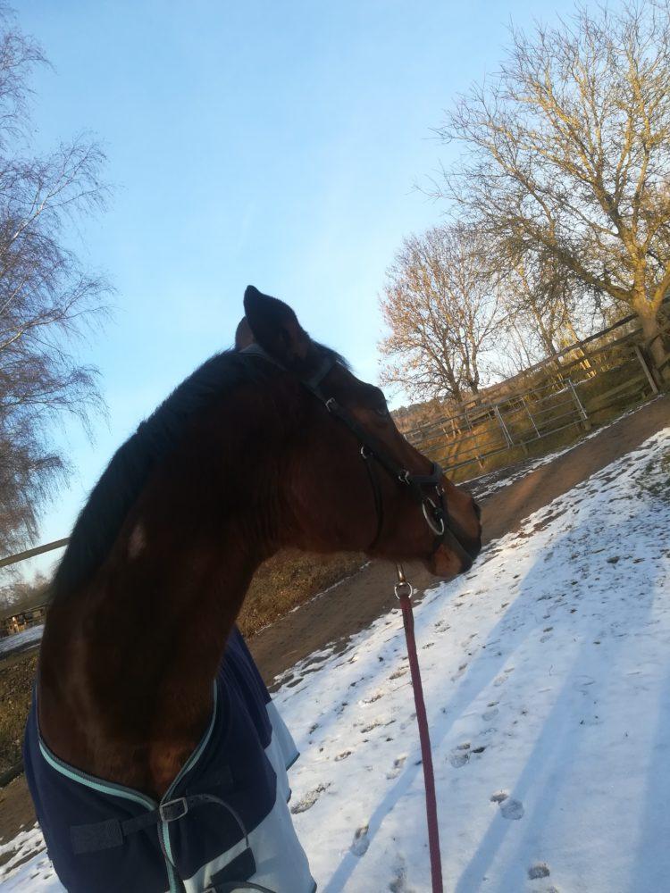 Desperado genießt die Wintersonne