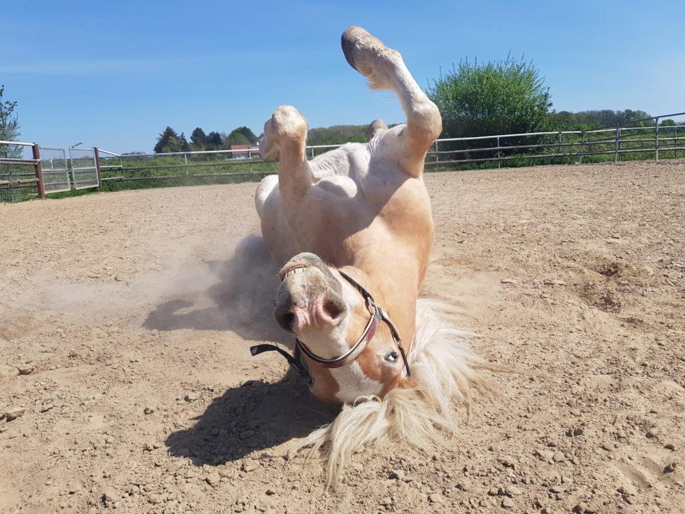 Hoch die Hände, Wochenende, auf Pferdeart.