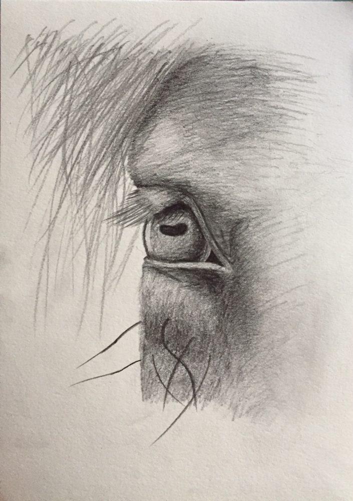 In jedem Pferd steckt ein gutes Herz
