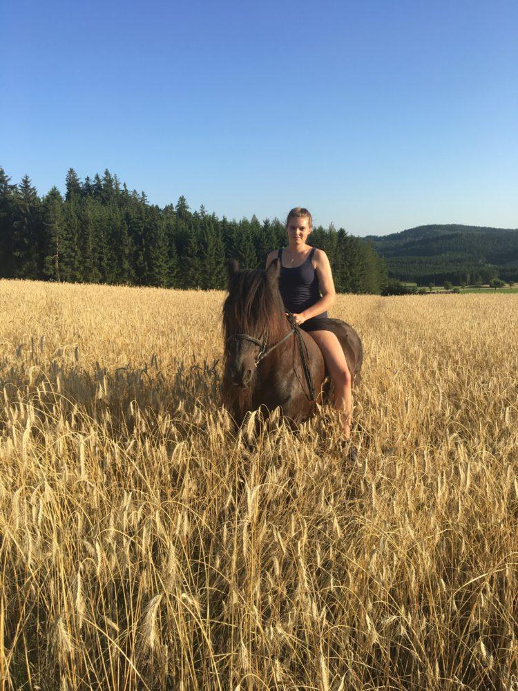 Ein Pferd im Kornfeld