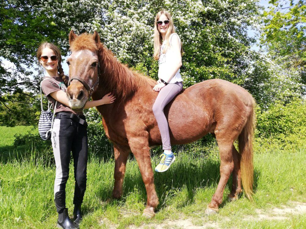 Wenn du das Vertrauen eines Pferdes gewonnen hast, hast du einen Freund fürs Leben gefunden ❣️