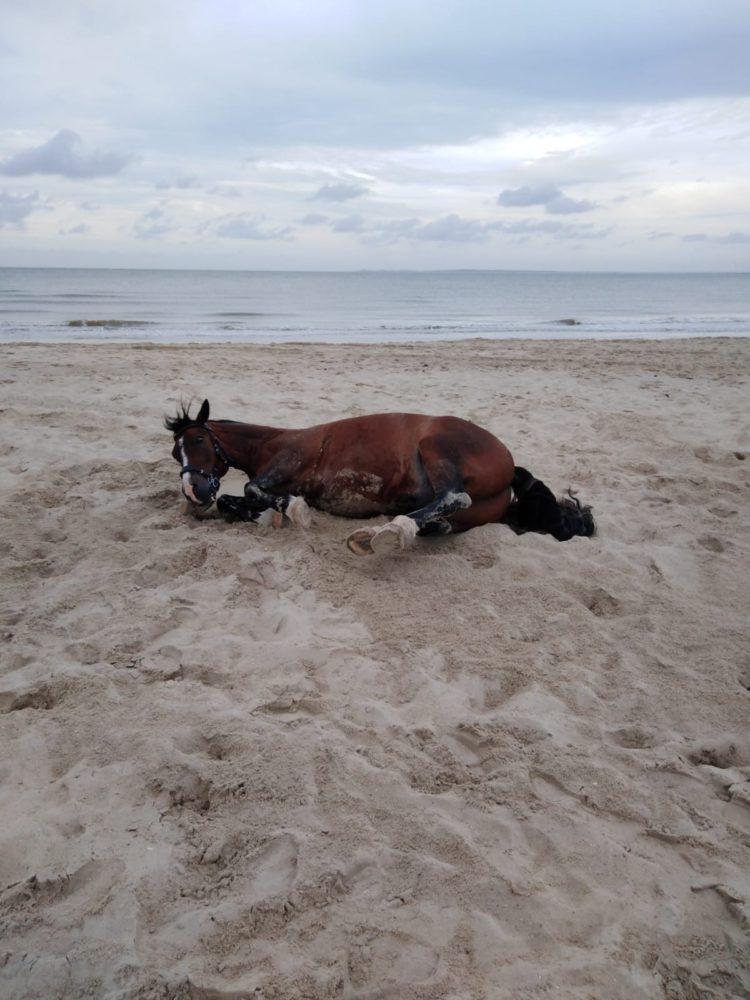 Wälzen am Strand
