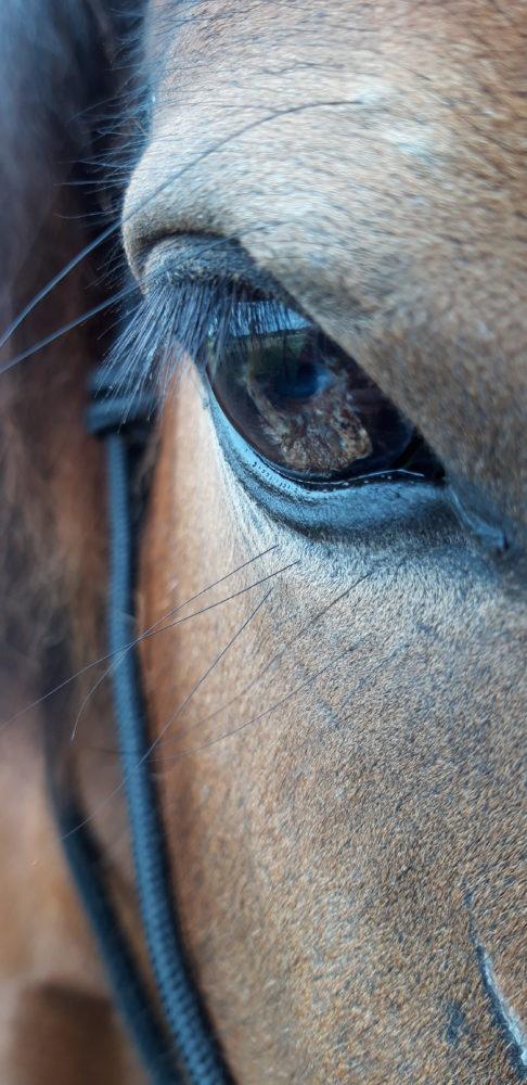 Das Auge meiner Stute