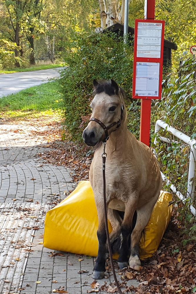 Raija wartet auf den Bus