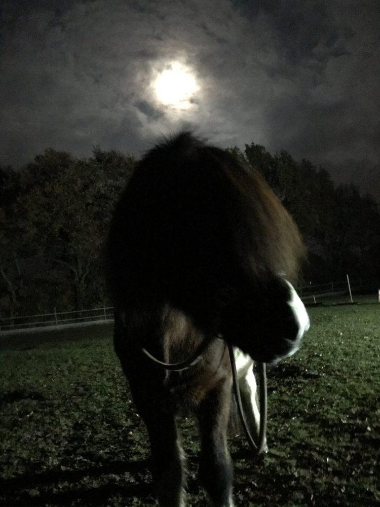 Skjoni im Mondschein