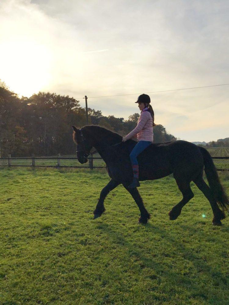 Pferde geben uns die Flügel, die wir nicht haben.🐎🦄