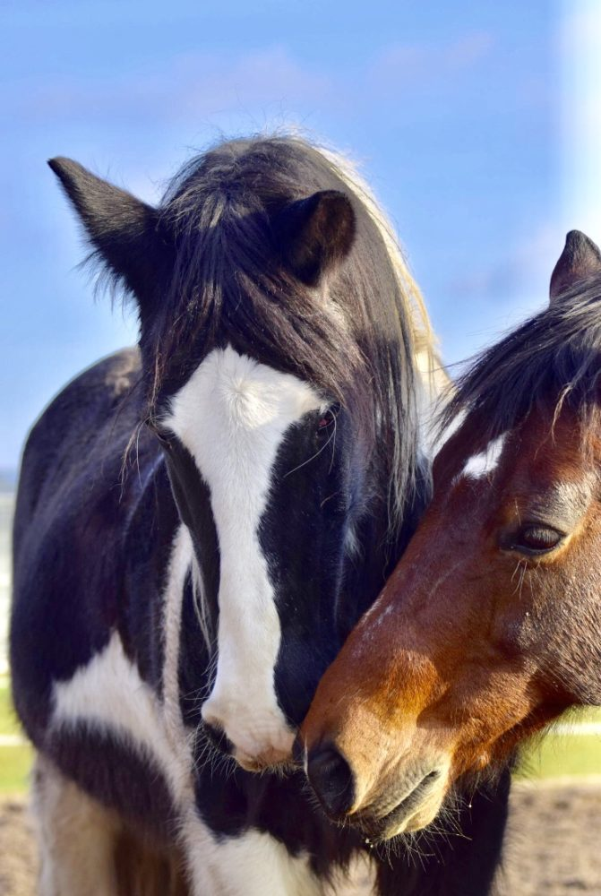 Pferdefreunde-Treffen