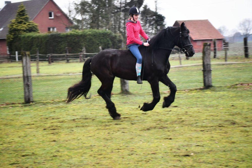 Das Glück 🐷🍀der Erde🌍 liegt auf dem Rücken der Pferde!🐎