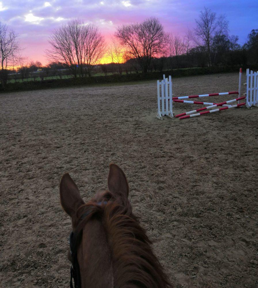 Zwischen den Pferdeohren sieht die Welt viel schöner aus