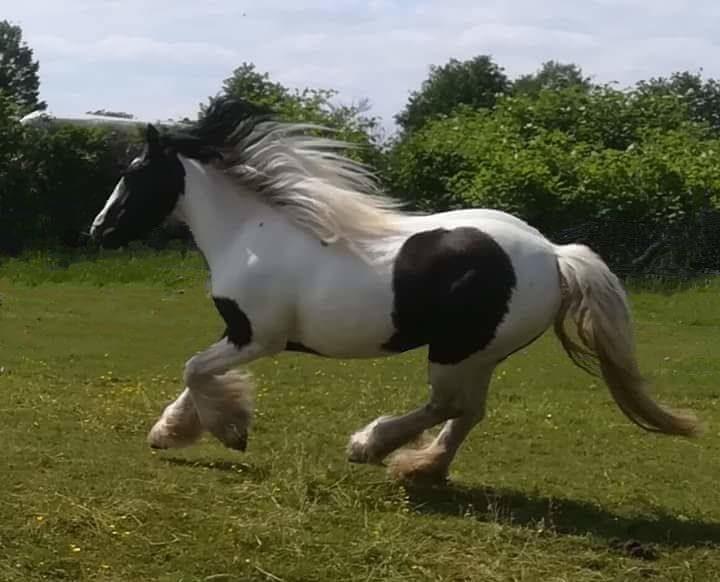 Prinzessinnen Pony