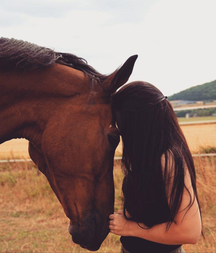 Mein Seelenpferd Lamour