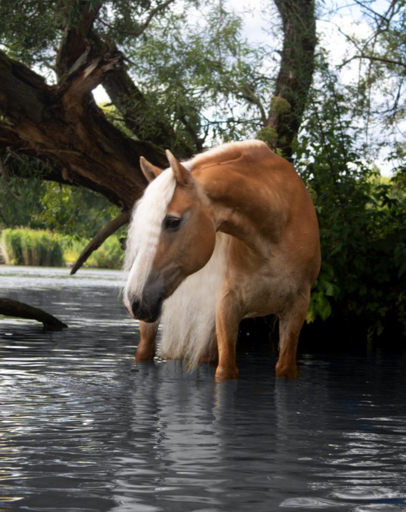 Grace im Wasser ❤️