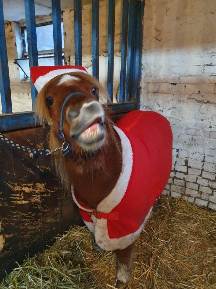Er grinst selbst als Weihnachtsmann verkleidet 😉