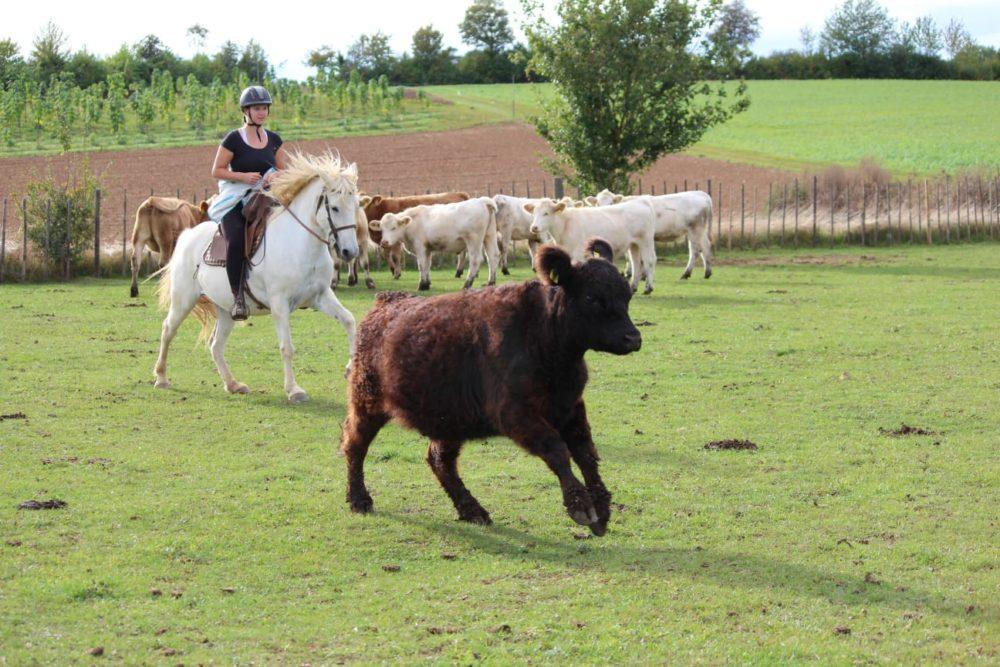 CamarguepferdLuna - Französische Reitweise - Camargusattel