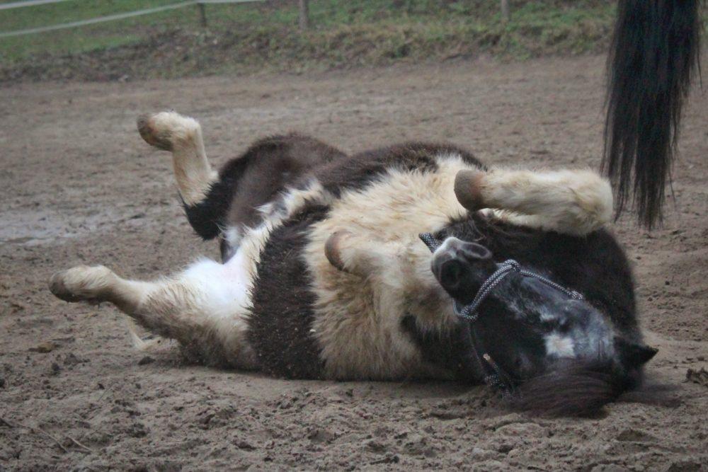 Ingo geniest ein Sandbad:)