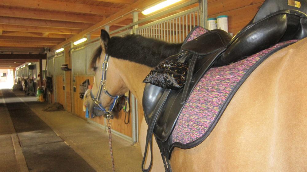 An einem Pferd schätzt man meist nicht seine Kraft, sondern seinen Charakter!