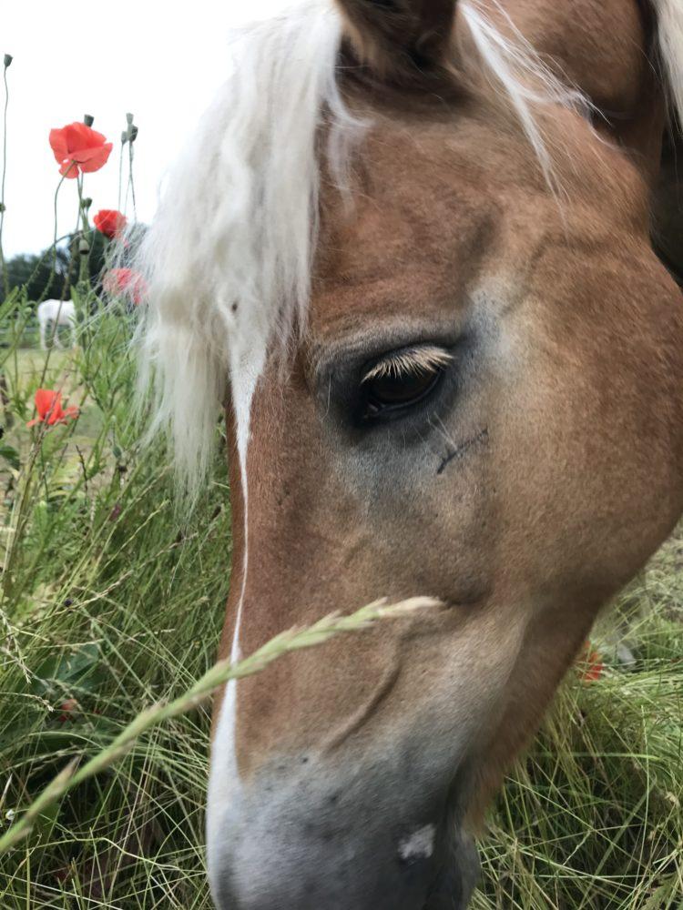 Verfressenes Pony
