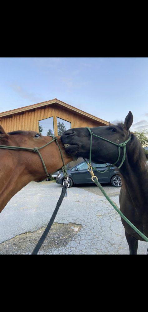 Maxi und Remmy beim Spazieren