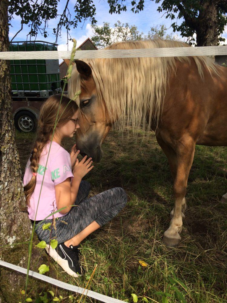 Pferde Liebe 💕